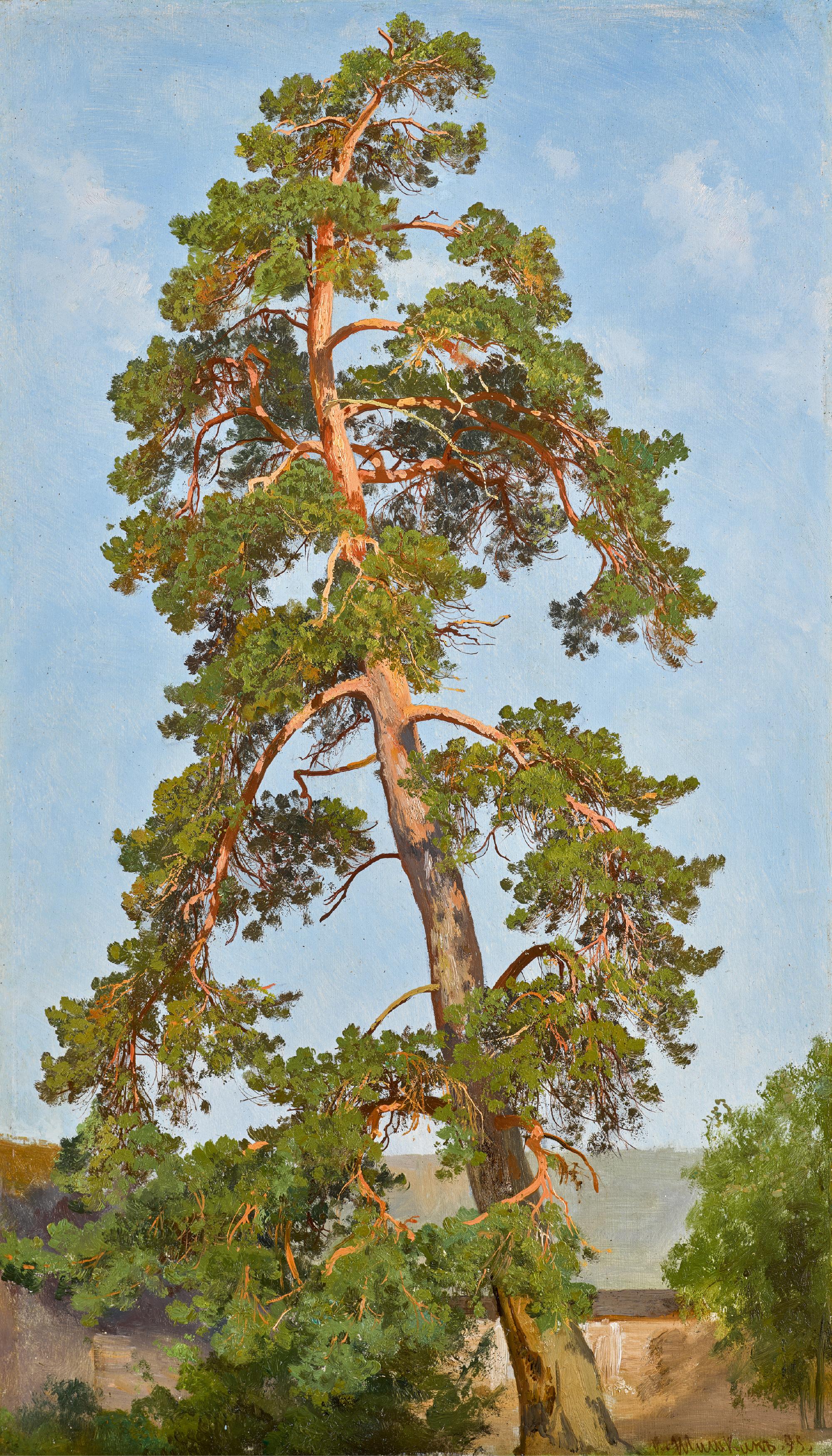 IVAN IVANOVICH SHISHKIN | Pine Tree